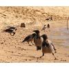Птичий Египет на Оке
