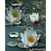pixelus_ru_1257359588.jpg