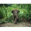 baby-asian-elephant_227_600x450.jpg