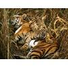 bengal-tigers_10_600x450.jpg