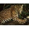 jaguar_587_600x450.jpg