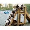 pandas-fathers-day_54204_600x450.jpg