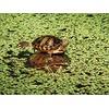 turtle-family_54993_600x450.jpg