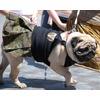 Улично-собачья мода