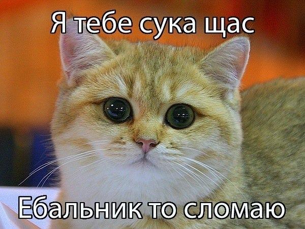 Изображение с http://cs316626.userapi.com/v316626974/31a6/9RH0JyBK9kk.jpg