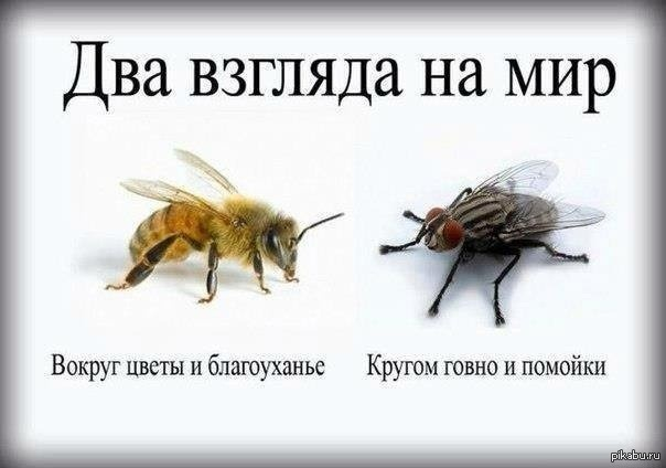 Изображение с http://s.pikabu.ru/post_img/2014/01/15/1/1389738395_1105584168.jpg