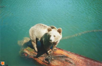 Медведица Машка