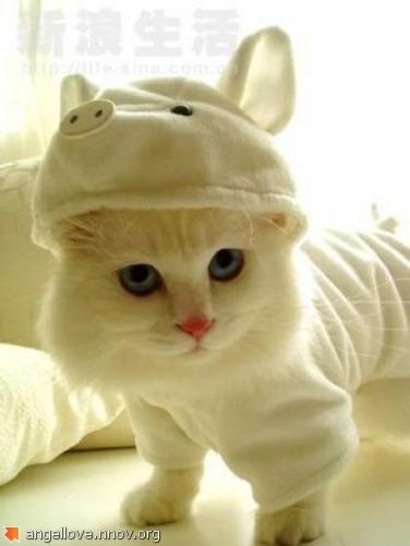 Если б кошки были хрюшками