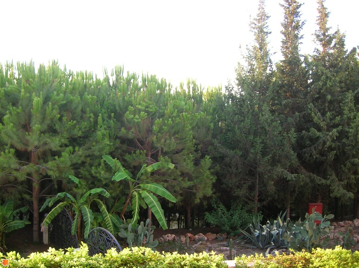 Растительность в отеле