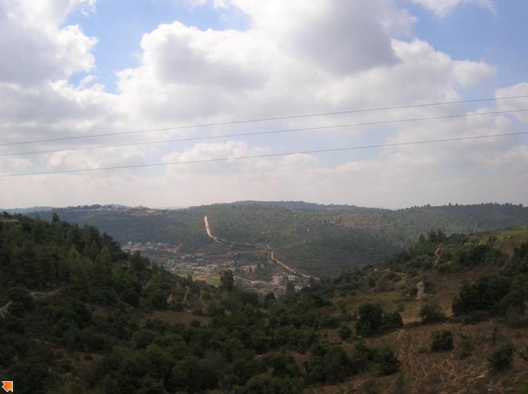 Каждое дерево высажено вручную...само по себе в Израиле ничего не растет...