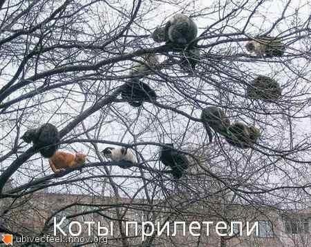 Коты прилетели.jpg