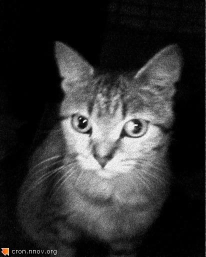 Совершенно незнакомая кошка