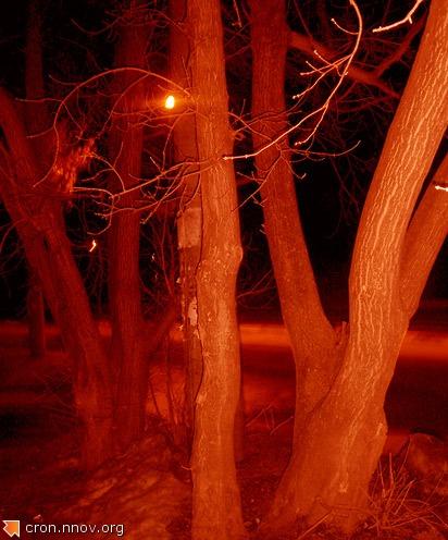 Деревья в инфракрасном свете