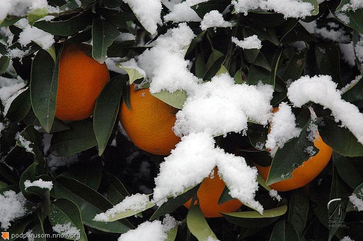 Апельсины в снегу