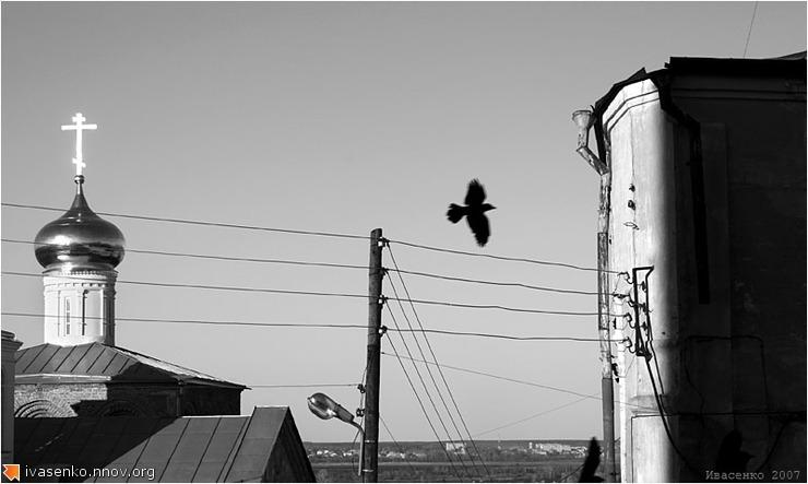 серия Птицы (1).jpg