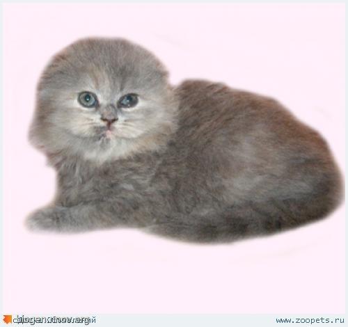 1784-kitten.jpg