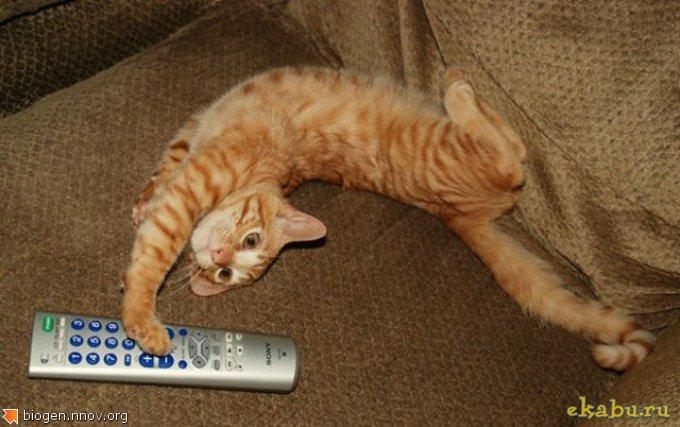 1292912376_cats_strange_positions_10.jpg