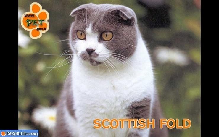 kediler-ekran-koruyucu.jpg