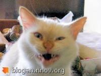strange-cat-mouth.jpg