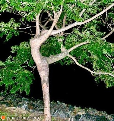 dancingspatree.jpg