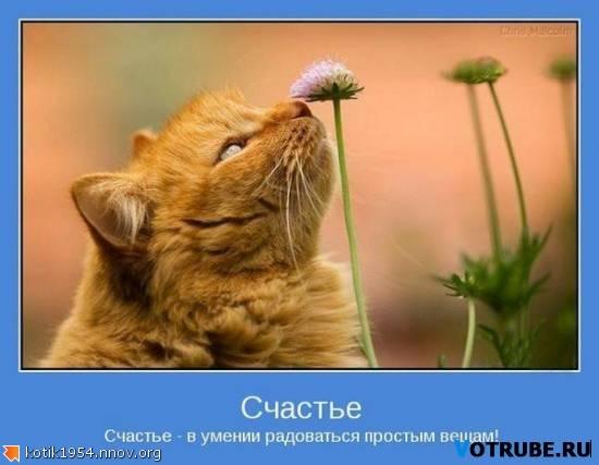 счастье простые вещи.jpg