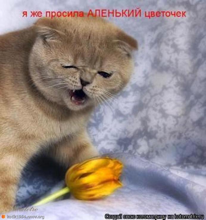 Я просила аленький цветочек.jpg