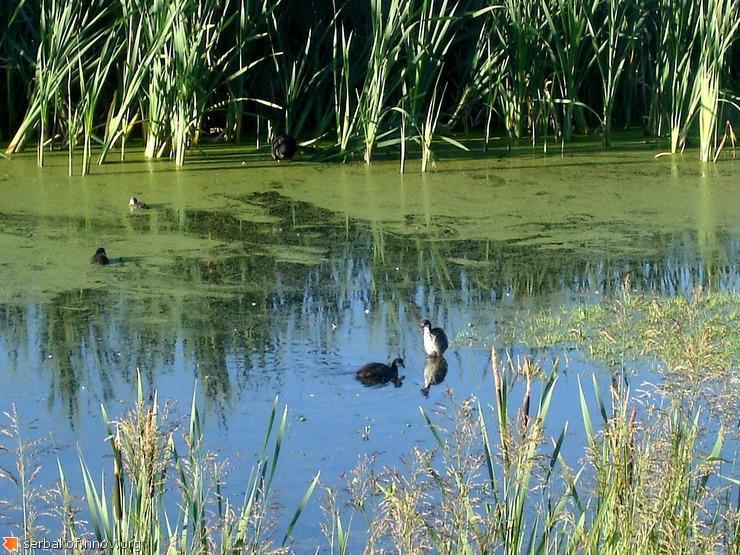 Родное болото
