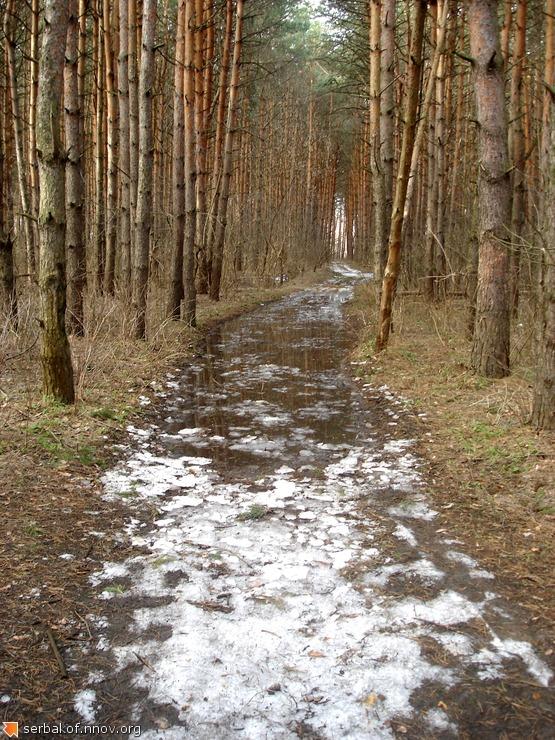 Апрельский лес