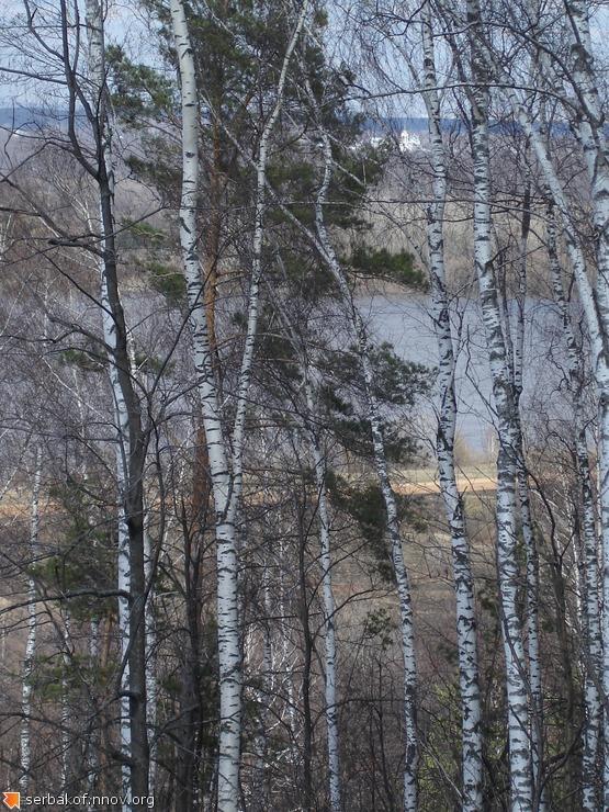 Ока сквозь берёзы и Храм в Гнилицах