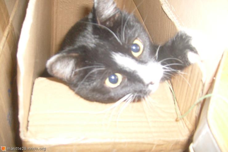 Кошечка стреилизована, игривая, молодая, НИЧЬЯ S7301618.JPG