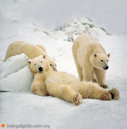 polar-bears-fathers-day_53980_600x450.jpg