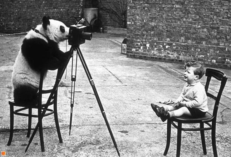 Панда-1.jpg