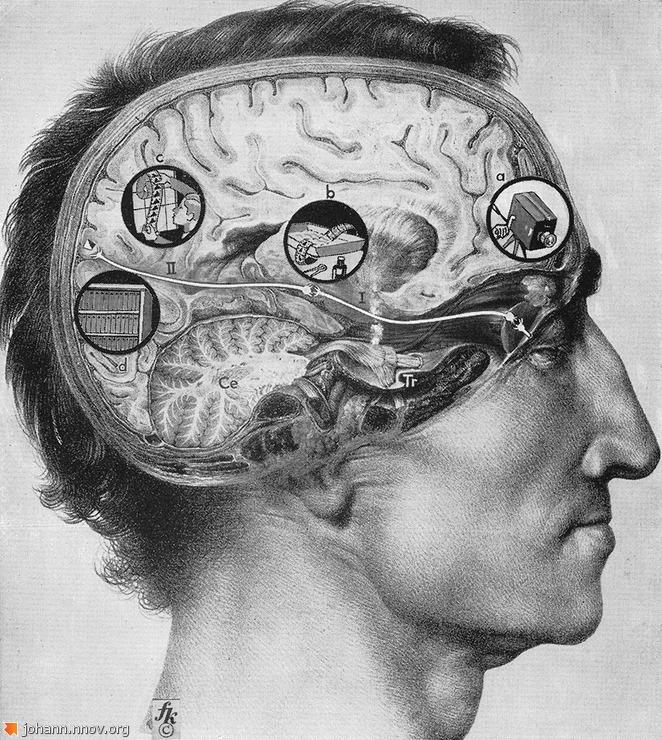 brain_lg.jpg