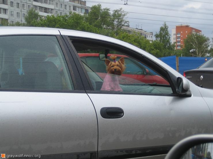 ШТУРМАНННша!)
