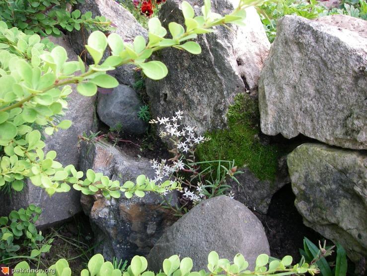 Альпийская горка и ветка барбариса