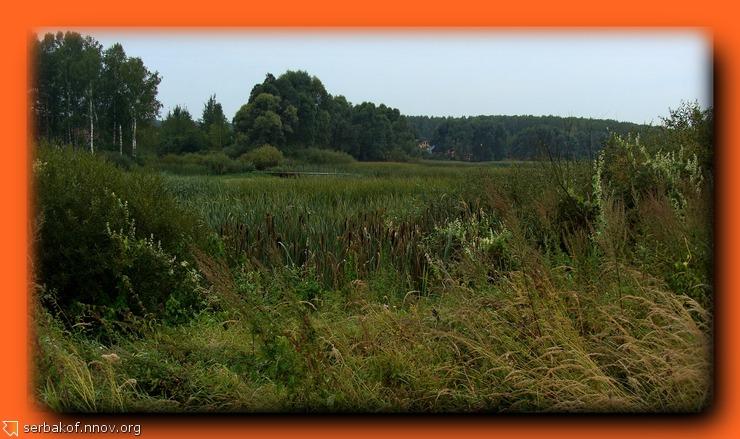 трава болото лес.jpg