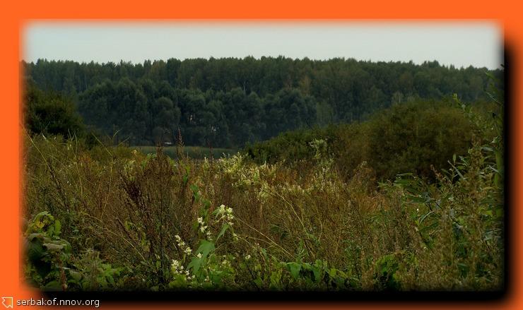 трава на фоне леса.jpg