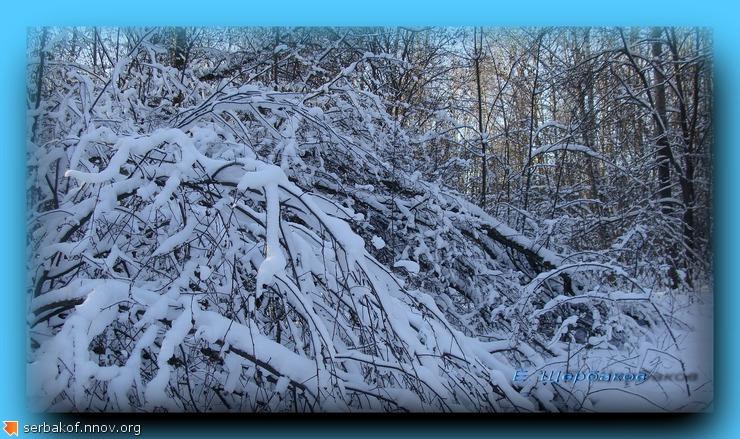 Ветки снег солнце.jpg