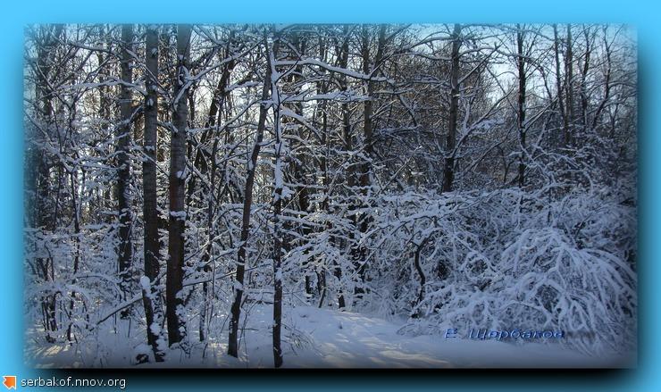 Ветки солнце снег.jpg