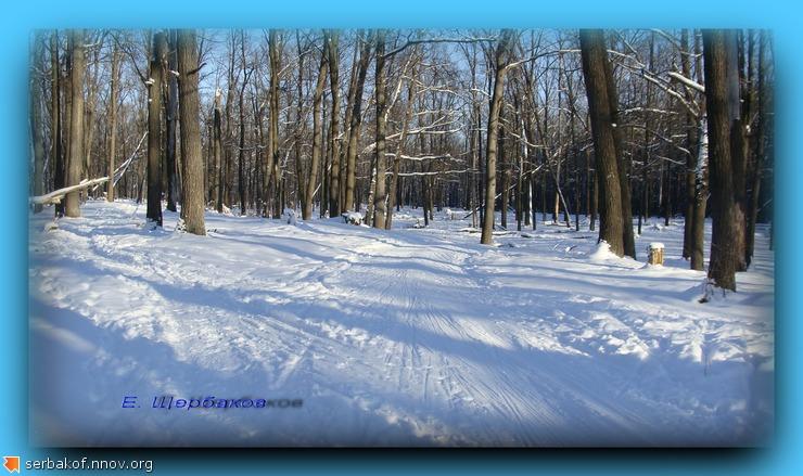 Коньковая лыжня.jpg