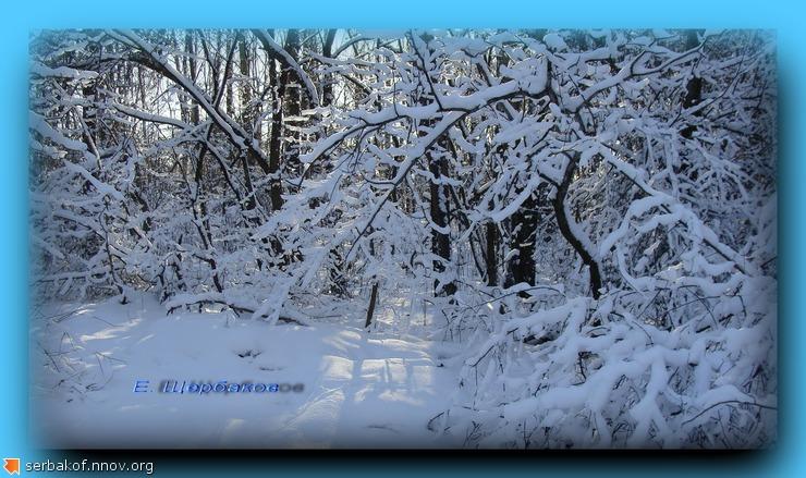 солнце ветки снег.jpg