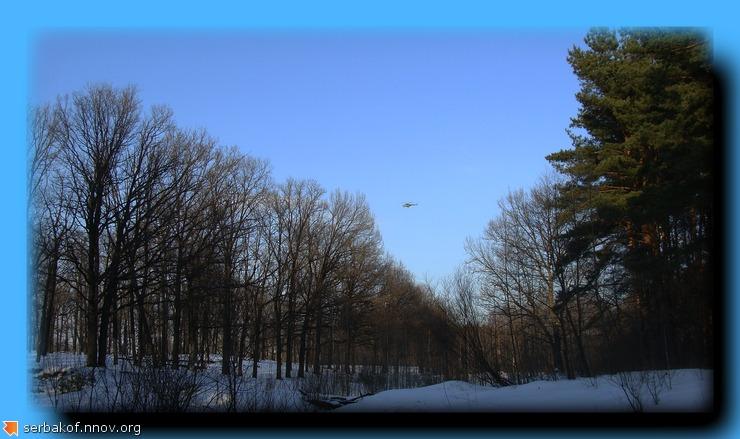 вертолёт над дубовой рощей.jpg