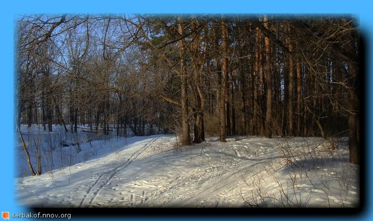 весенняя лыжня.jpg
