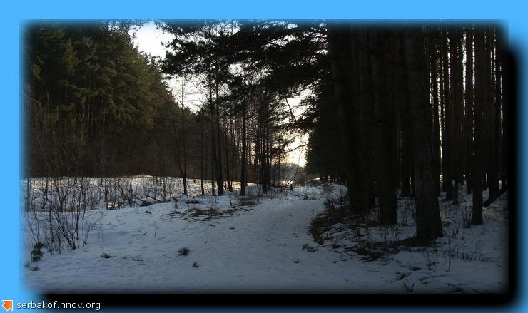 лес март 14.jpg