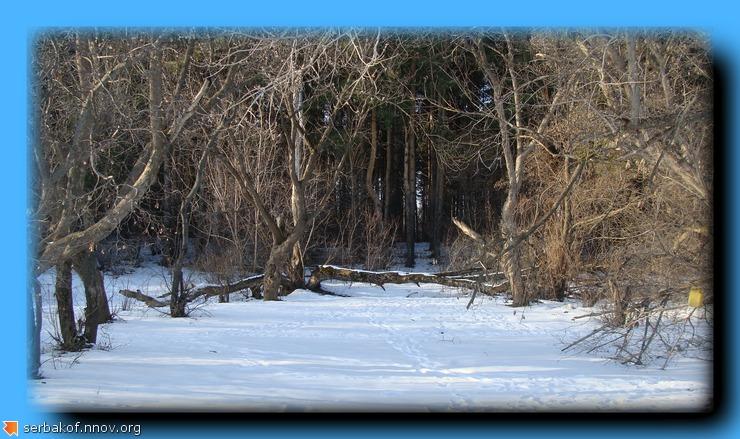 лес у Оки.jpg