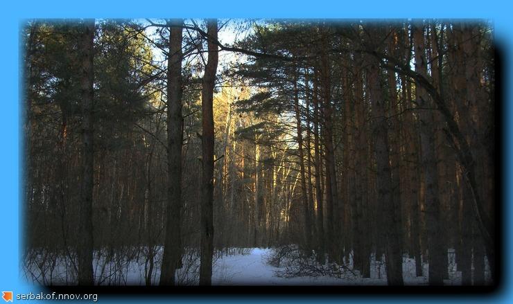 солнце в лесу.jpg