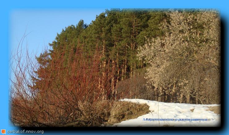 мартовское разноцветье.jpg