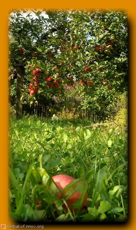 яблоко.jpg