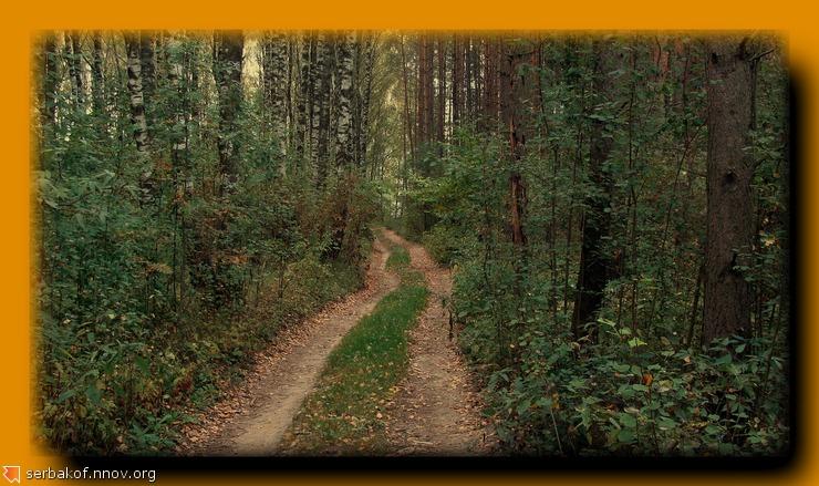кривая дорога в лесу.jpg