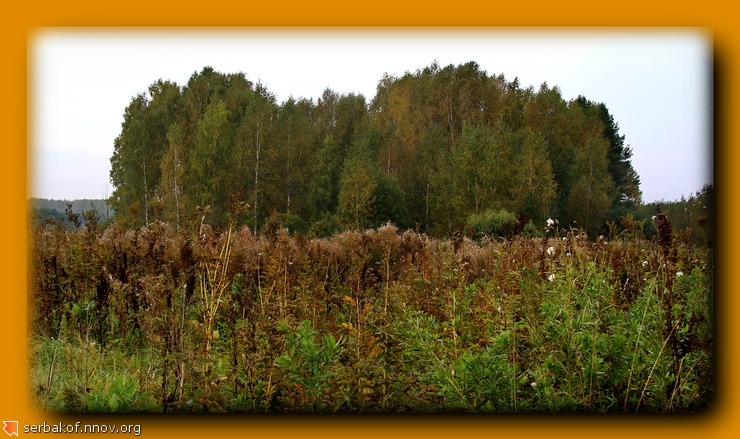 кучка леса.jpg